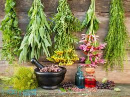 Chuyên cung cấp các loại nguyên liệu thảo mộc tươi.
